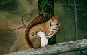 """Red Squirrel"""